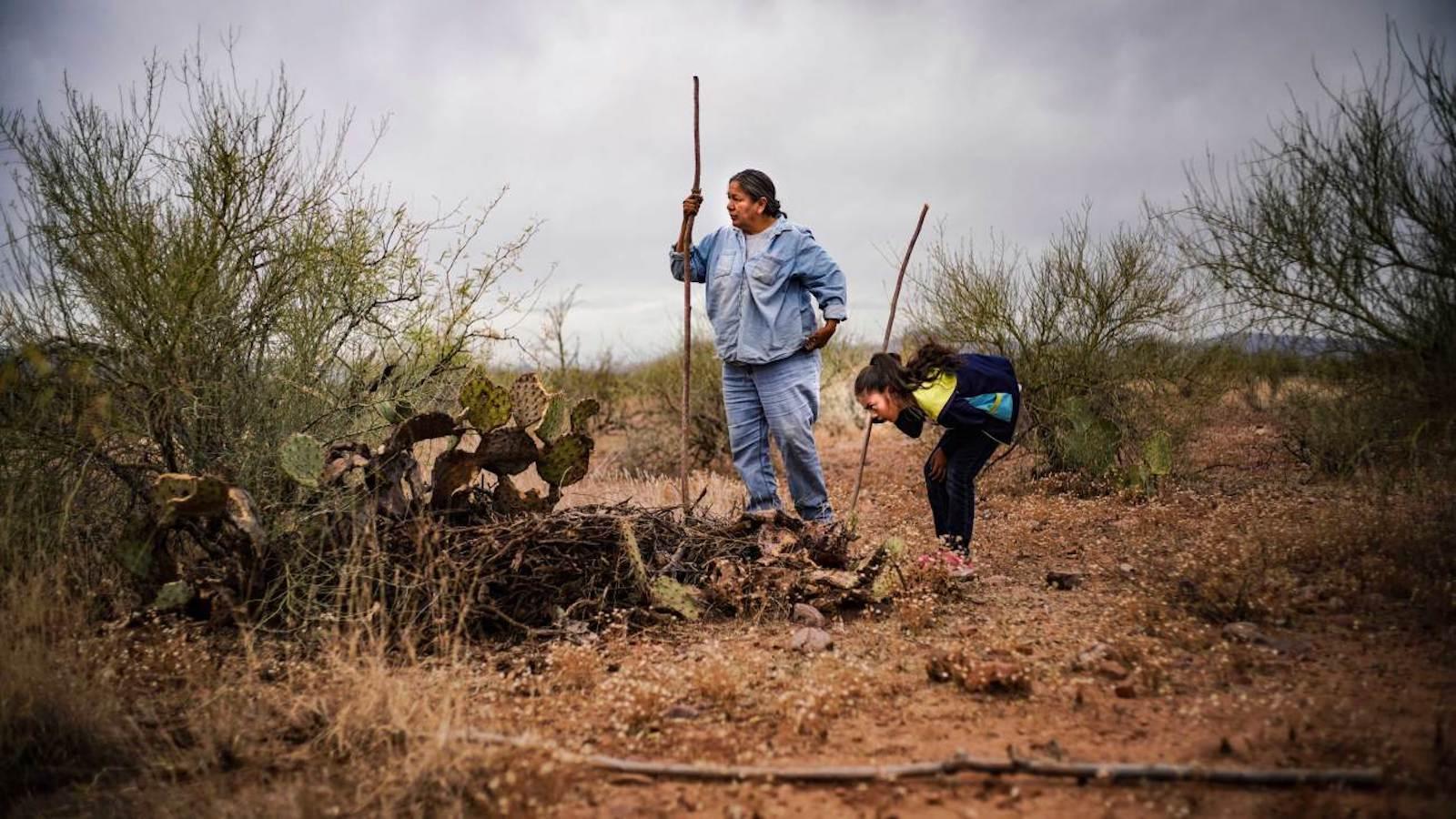 Apache forager Twila Cassadore