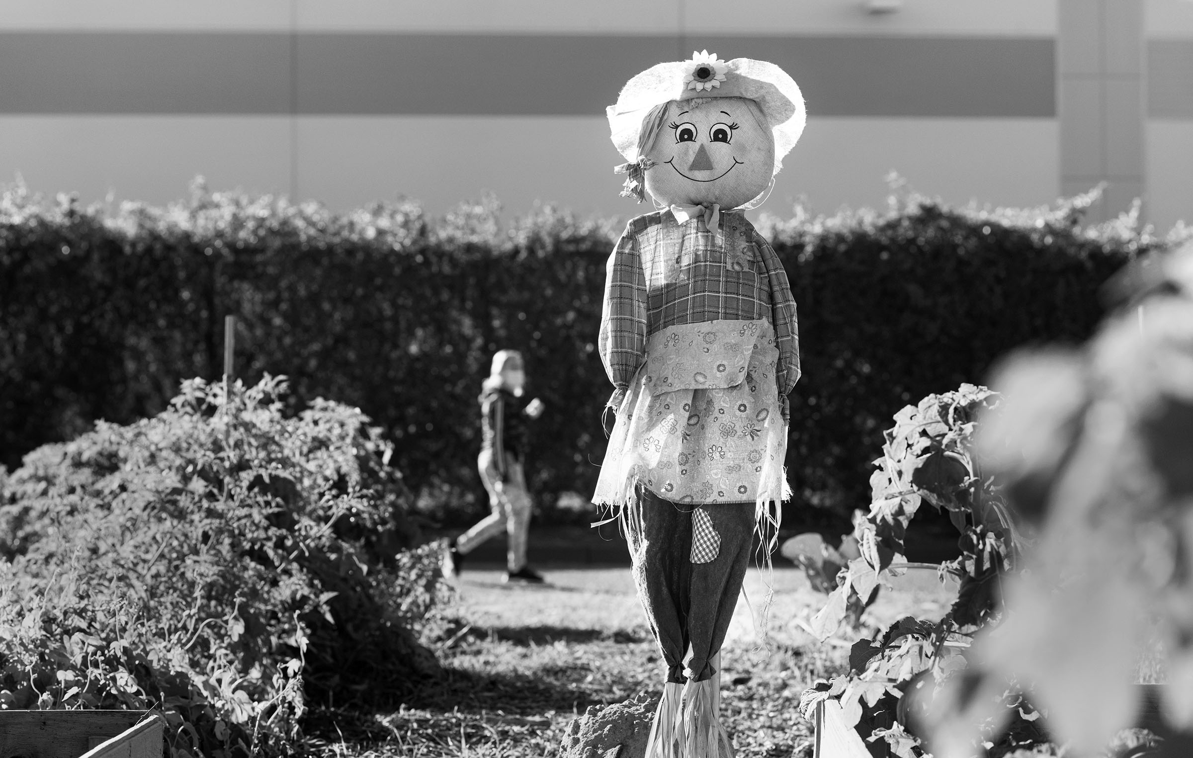 Community Garden participants decorated a scarecrow placed between plots used to keep birds away from their gardens.