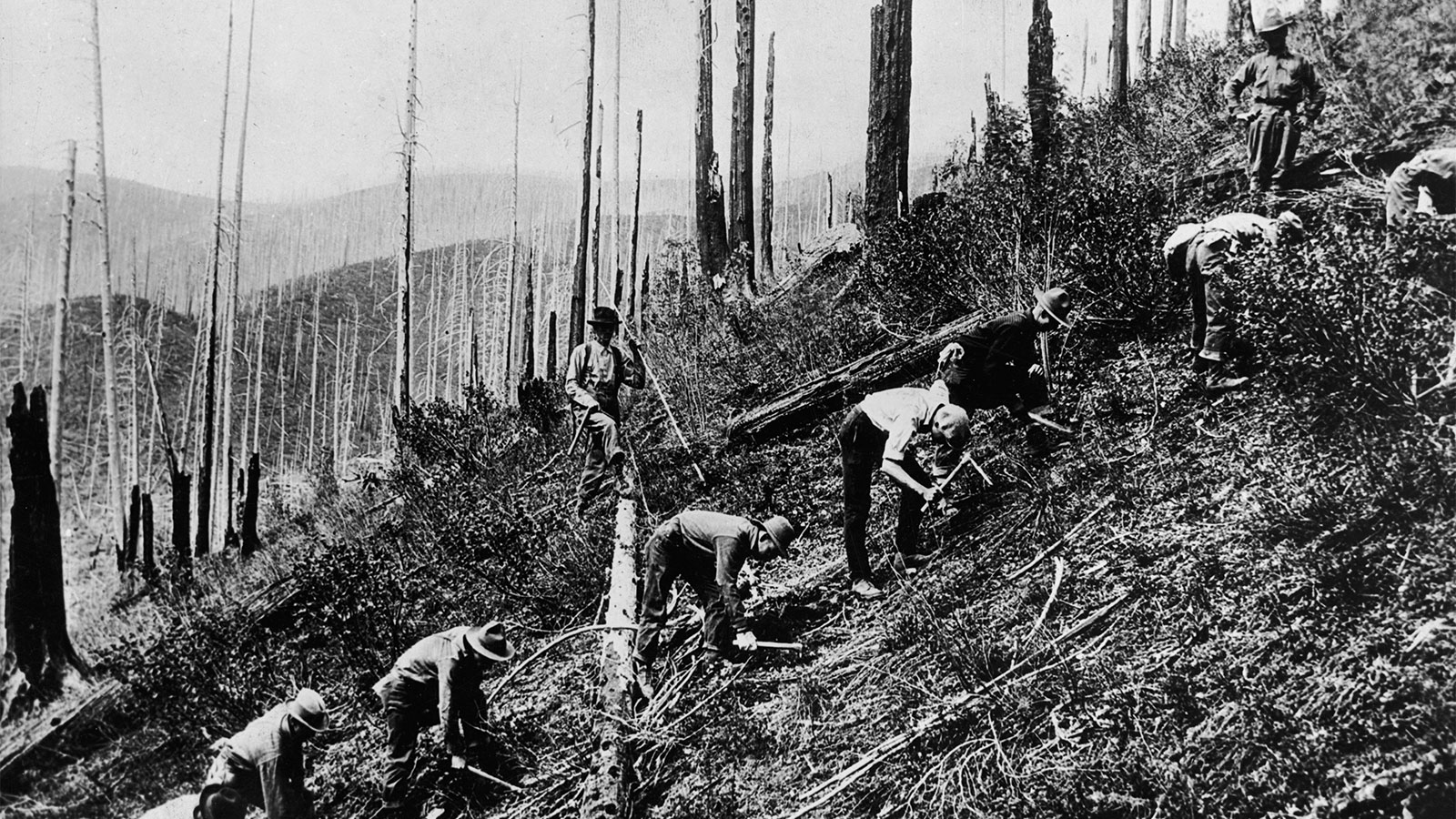 A black and white illustration of civilian climate core reforestation