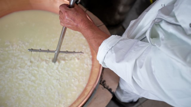 Male cheese maker slicing cheese curd with a curd cutter.
