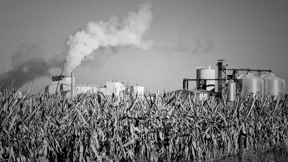 A photograph of a field of corn in front of an ethanol plant.