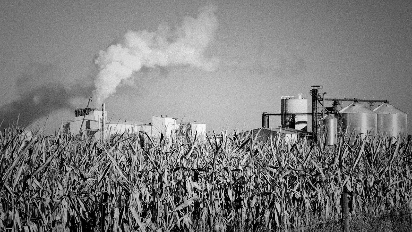 Why won't Joe Biden let ethanol die already?