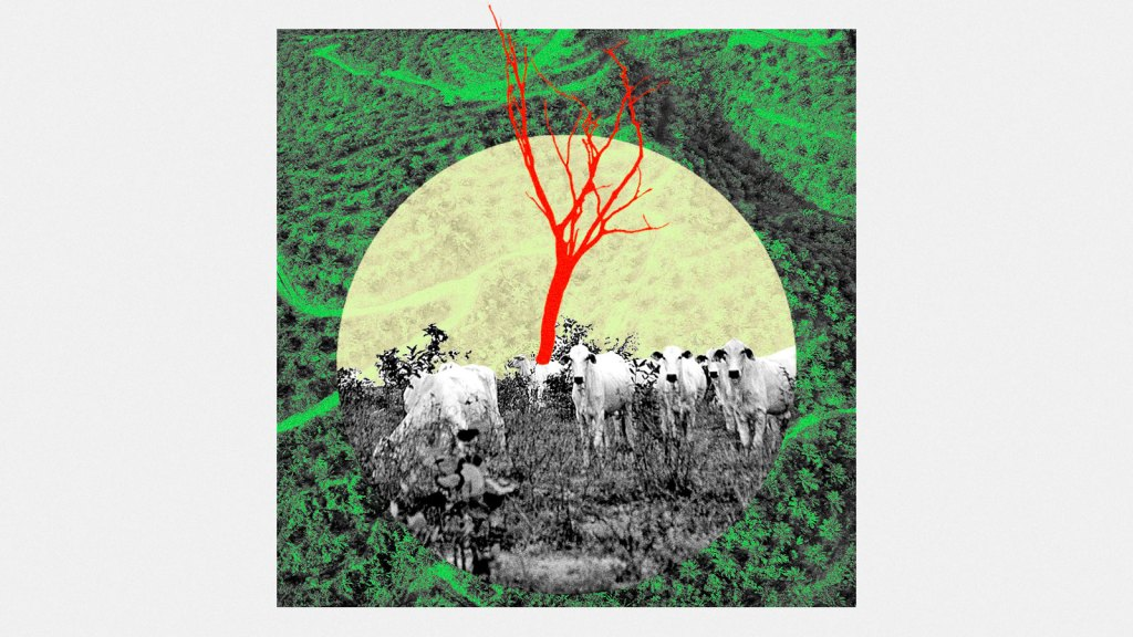 A photo collage of a palm oil plantation with a circular image of Brazilian cattle grazing on a deforested field.