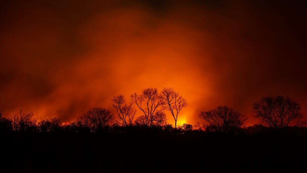 A photo of trees silhouetted against bright orange flames
