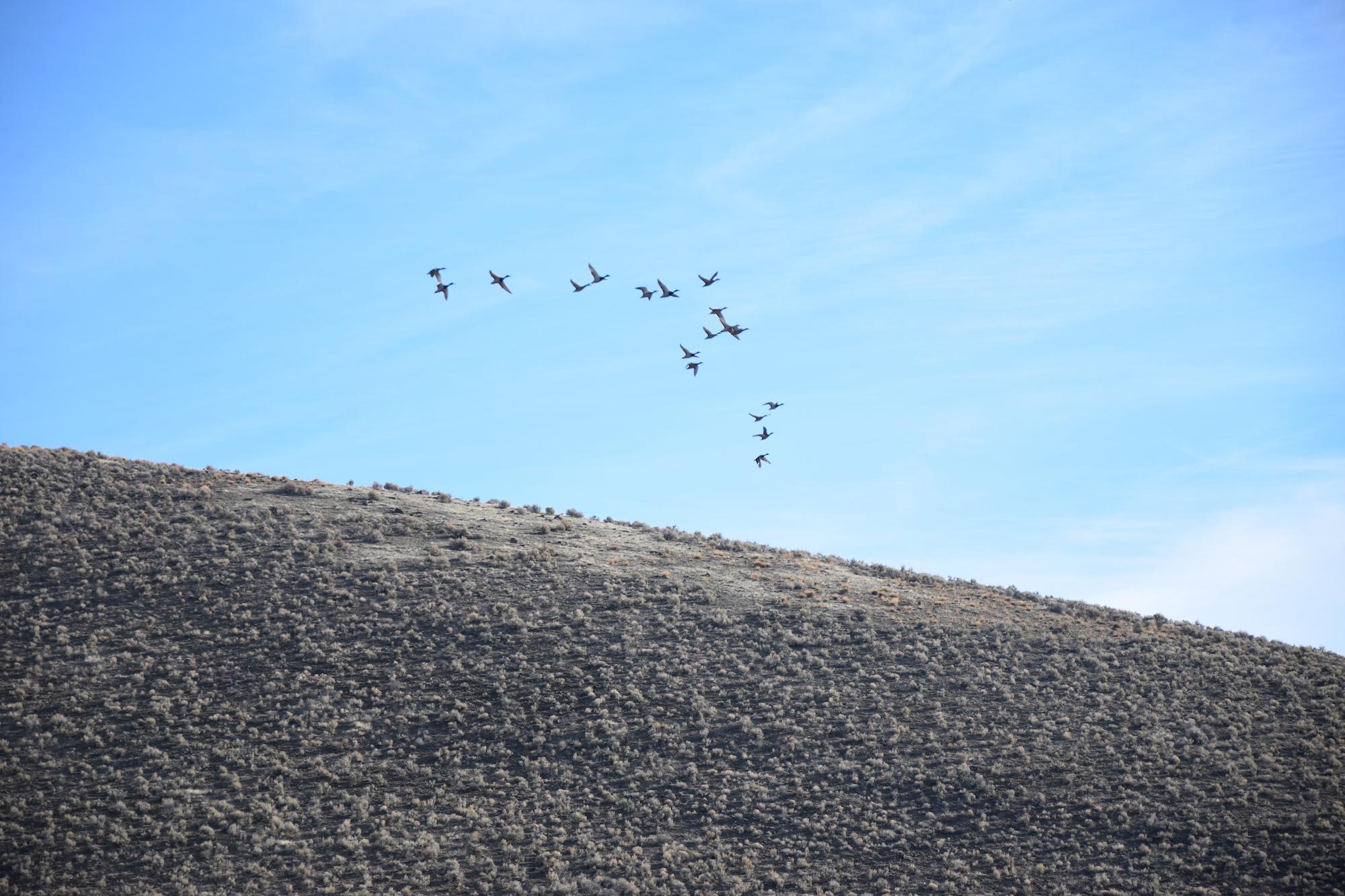 Birds take to the air near Thacker Pass