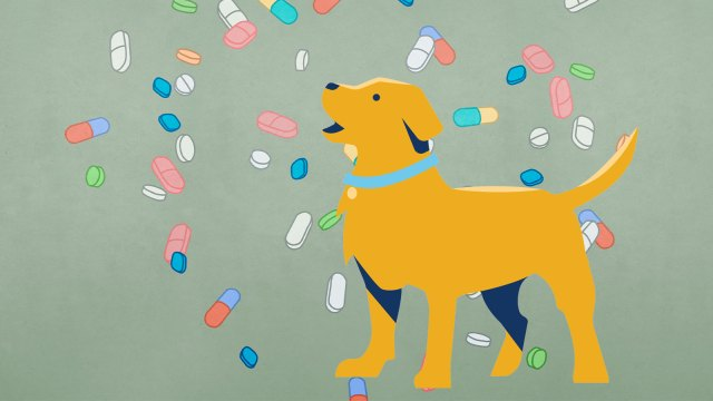 An illustration of a yellow dog on a background of vitamins and pills.