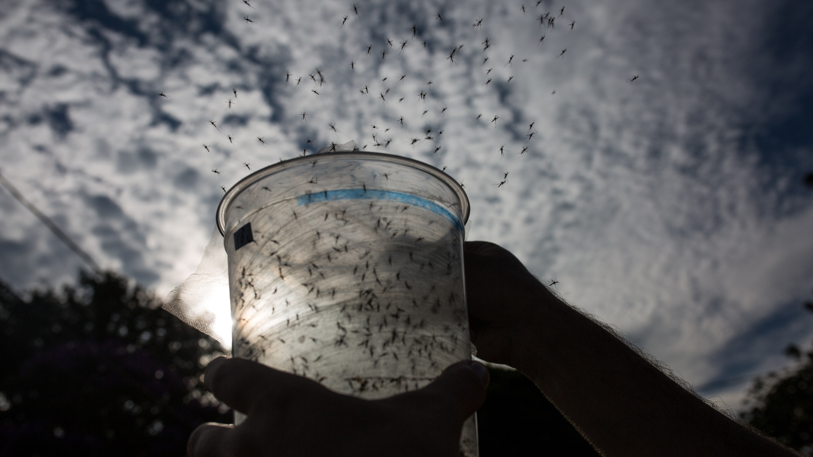 mosquitoes flying out of container