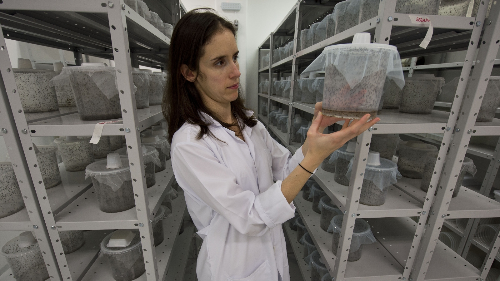 scientist in white coat holding container of mosquitoes