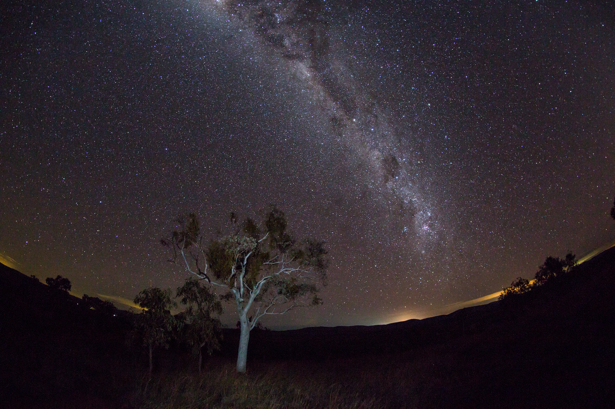 A snappy gum tree in the center of the photo. Above, a night sky full of stars