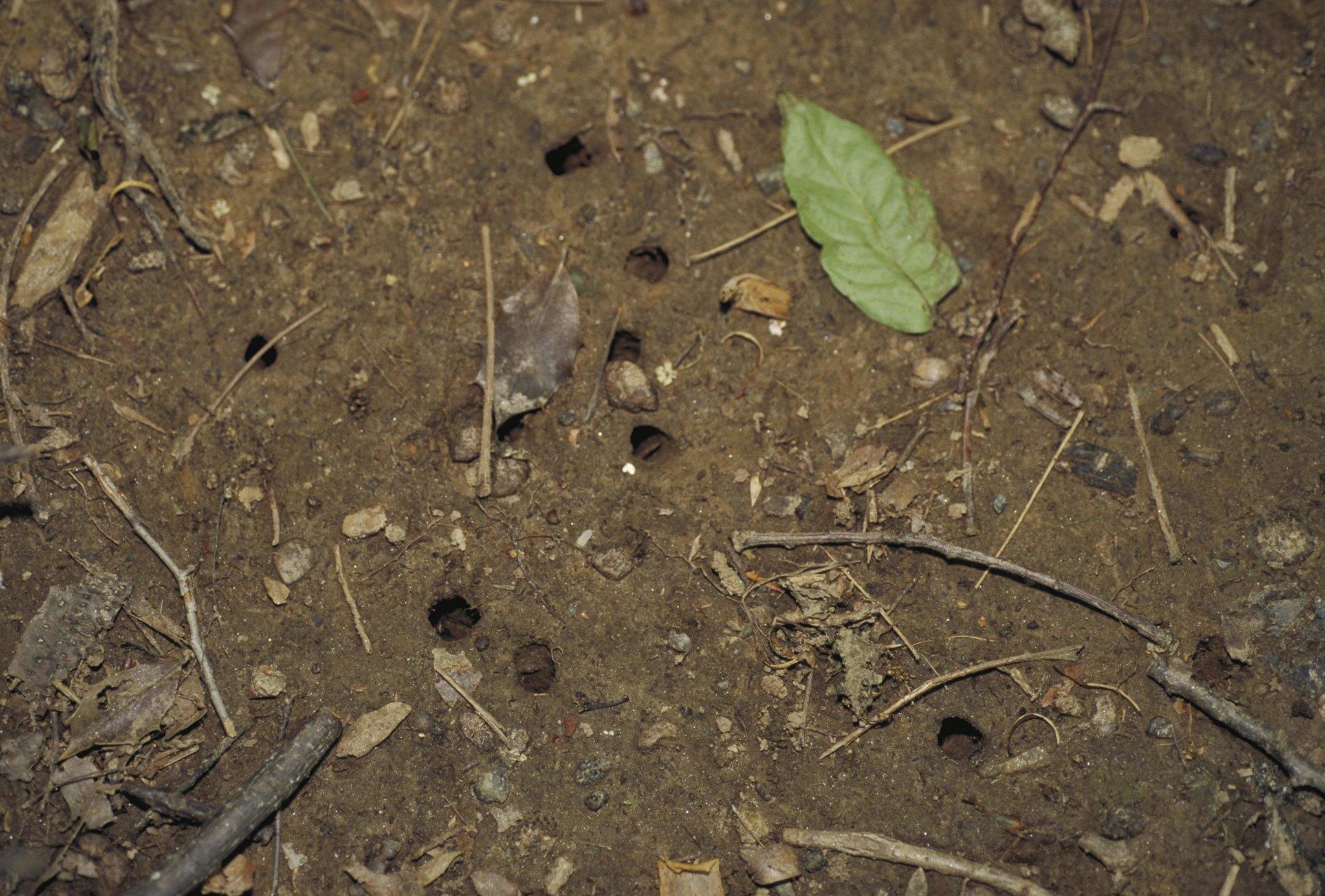 شلیک هوایی از سوراخ های بسیار کوچک در خاک