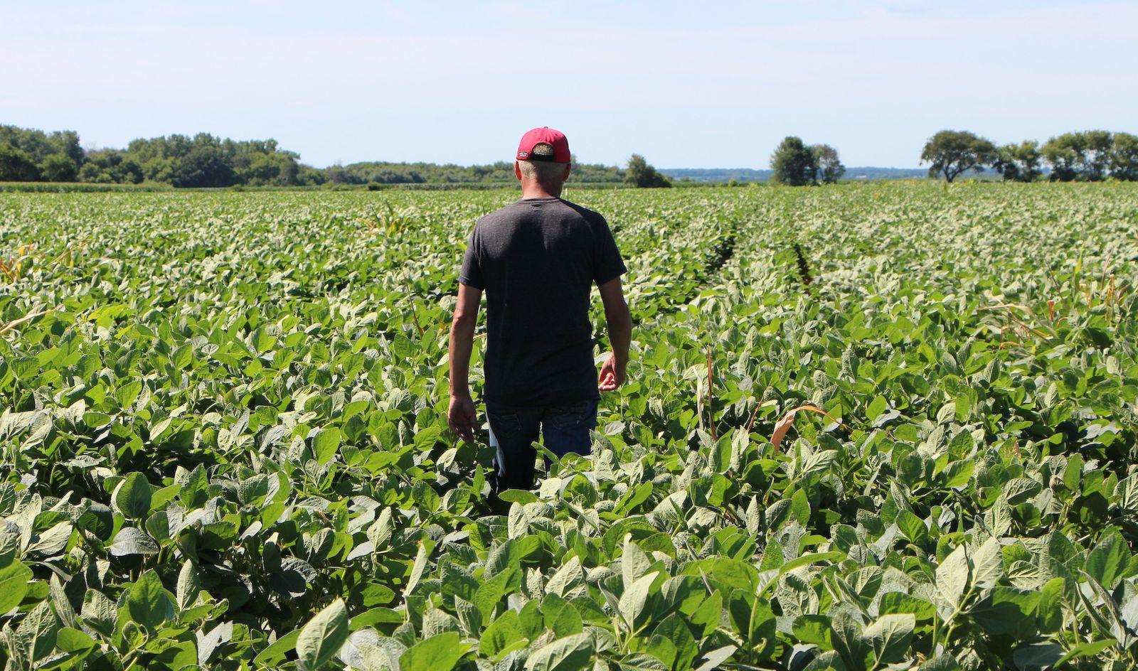 farmer soy field illinois