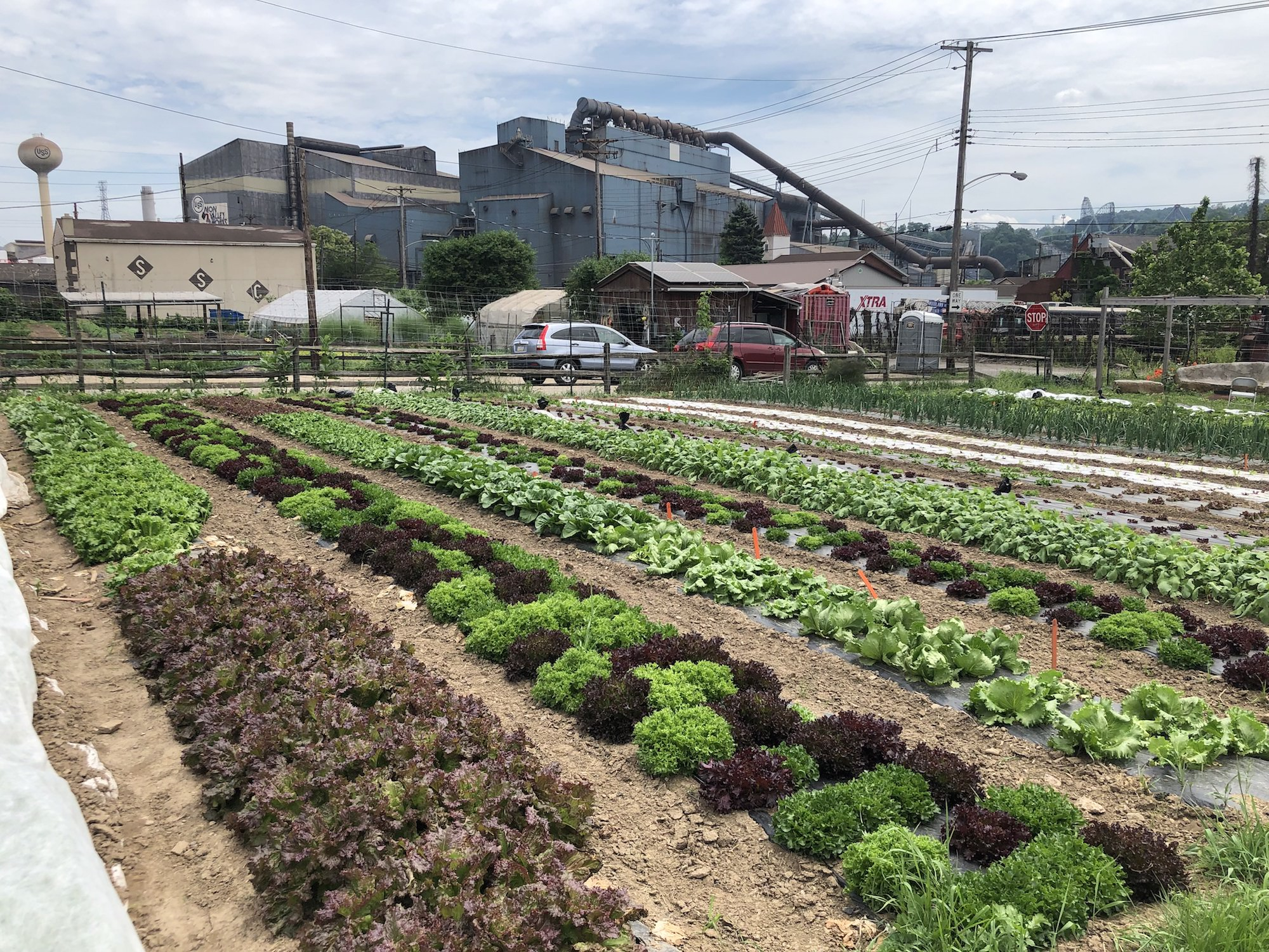 rows of plants grow outdoors from the earth with a blue industrial warehouse in the background