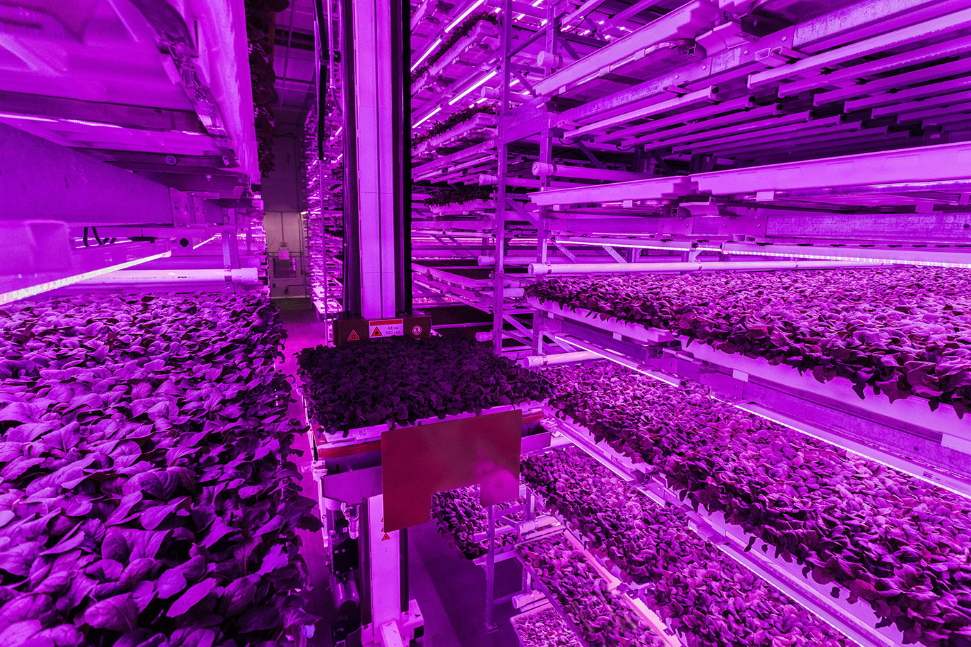 A robot moves between trays of baby greens at Fifth Season