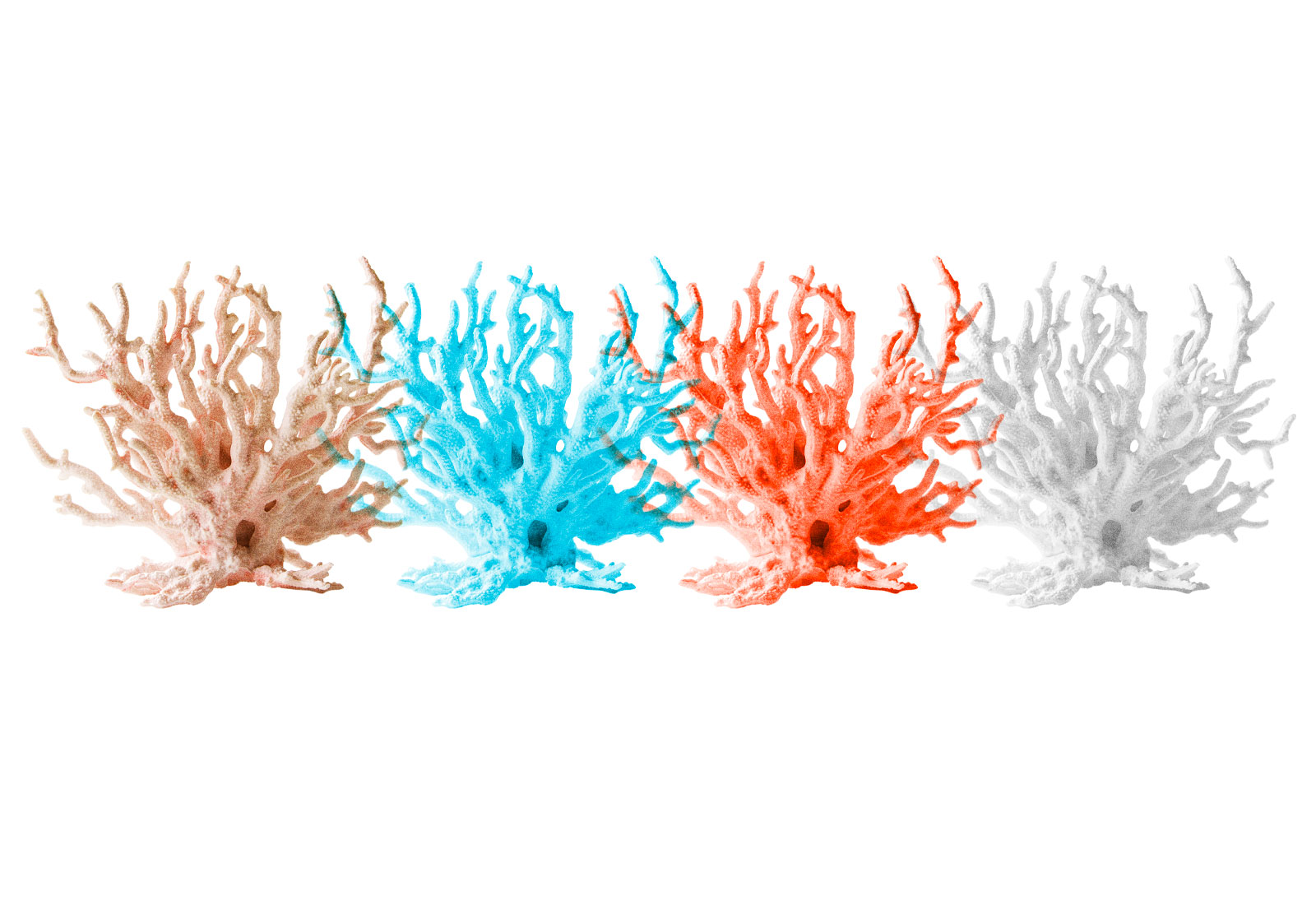 Collage: Four pieces of coral in a row; one pink, one blue, one red, and one greyscale