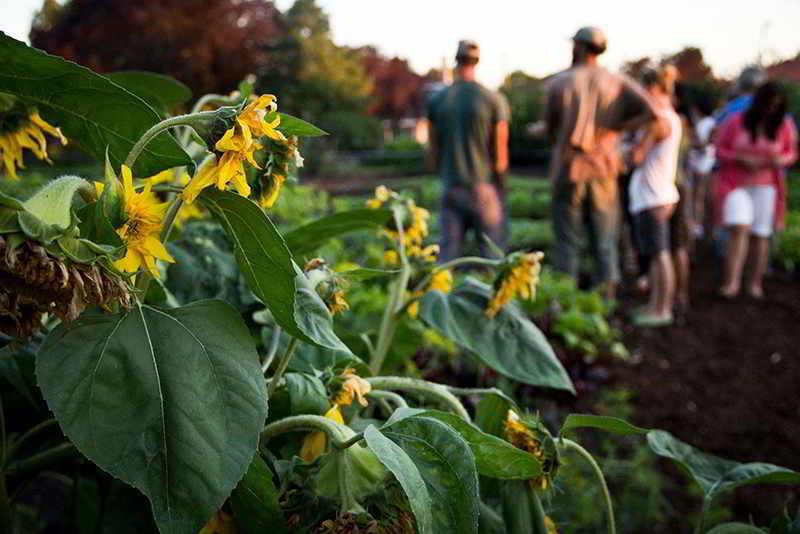 urban farming argoecology