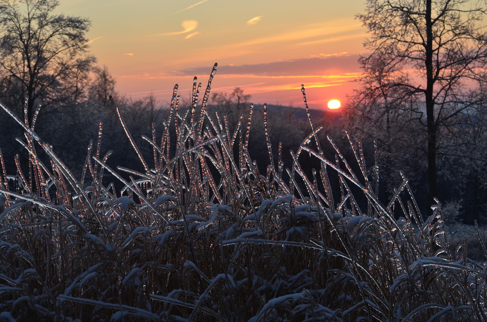 a sunset over frozen grasses