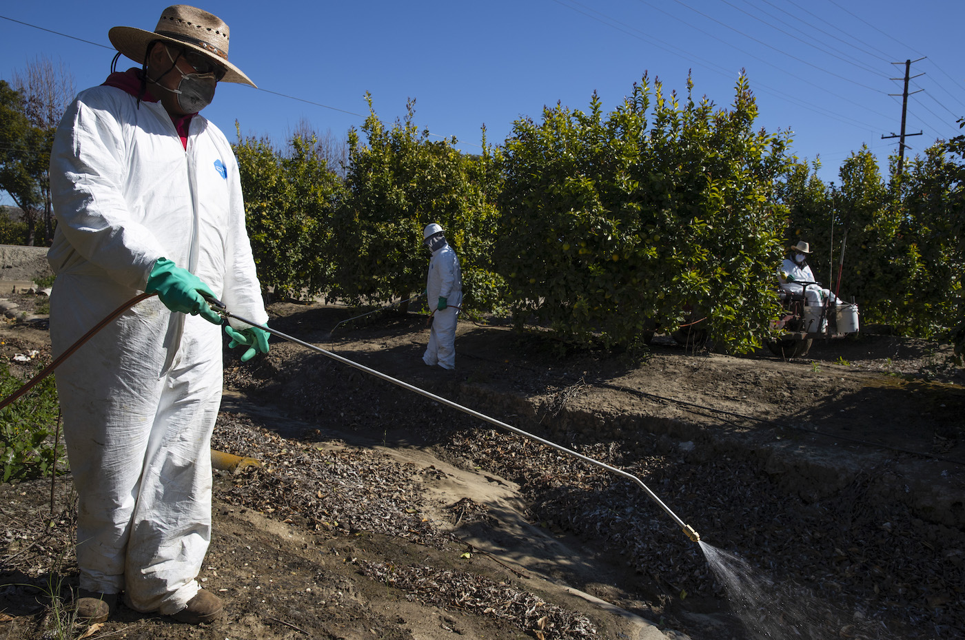 Farm workers spray against insects and weeds inside the orchards of a fruit farm in Mesa, California