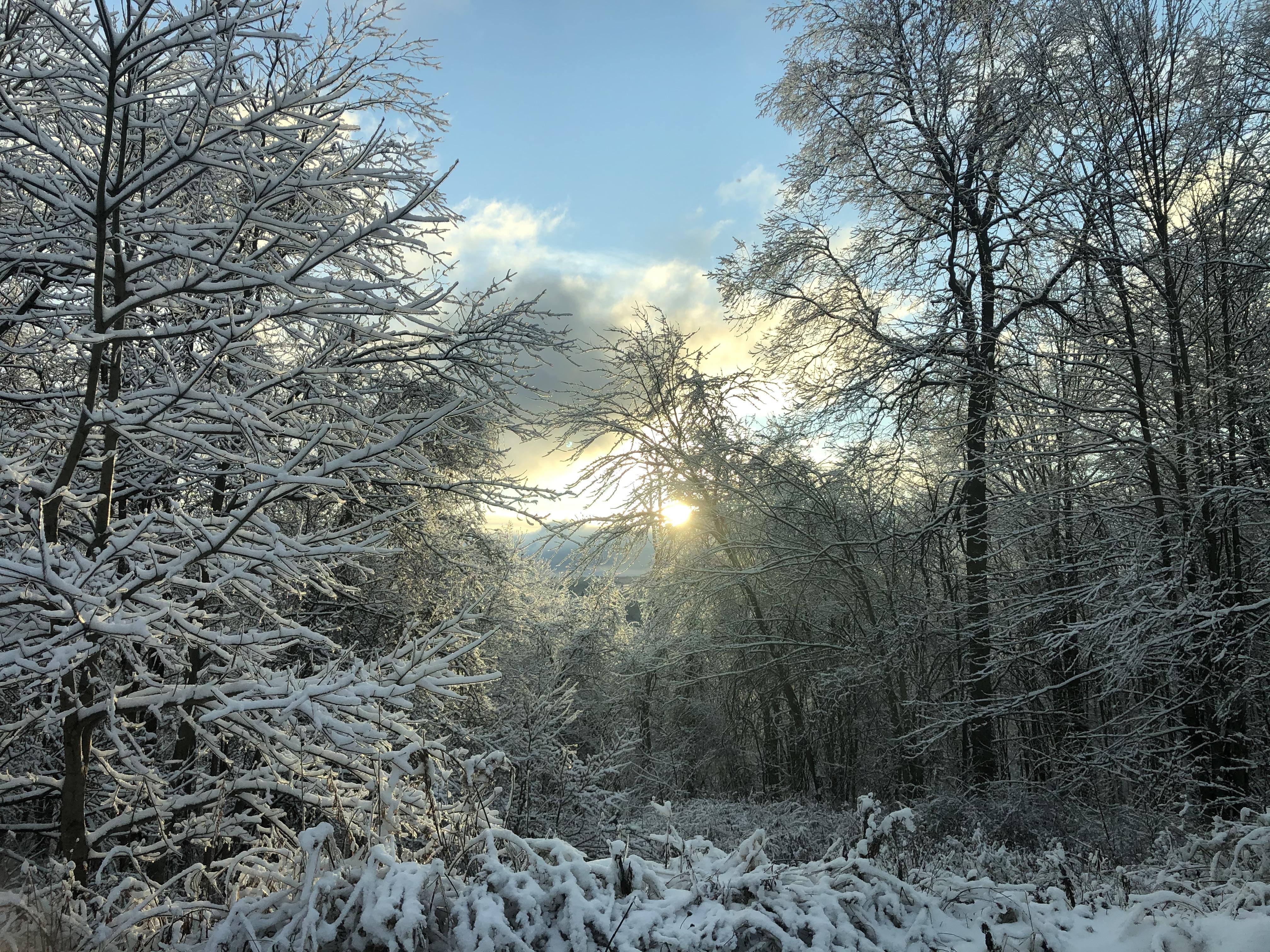 a frozen forest in western Pennsylvania
