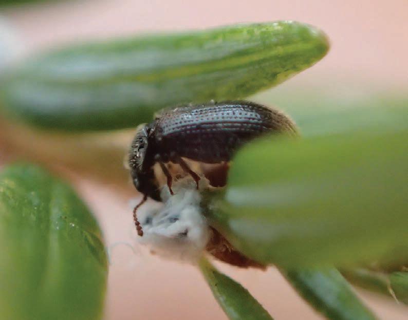 a black beetle on a green leaf