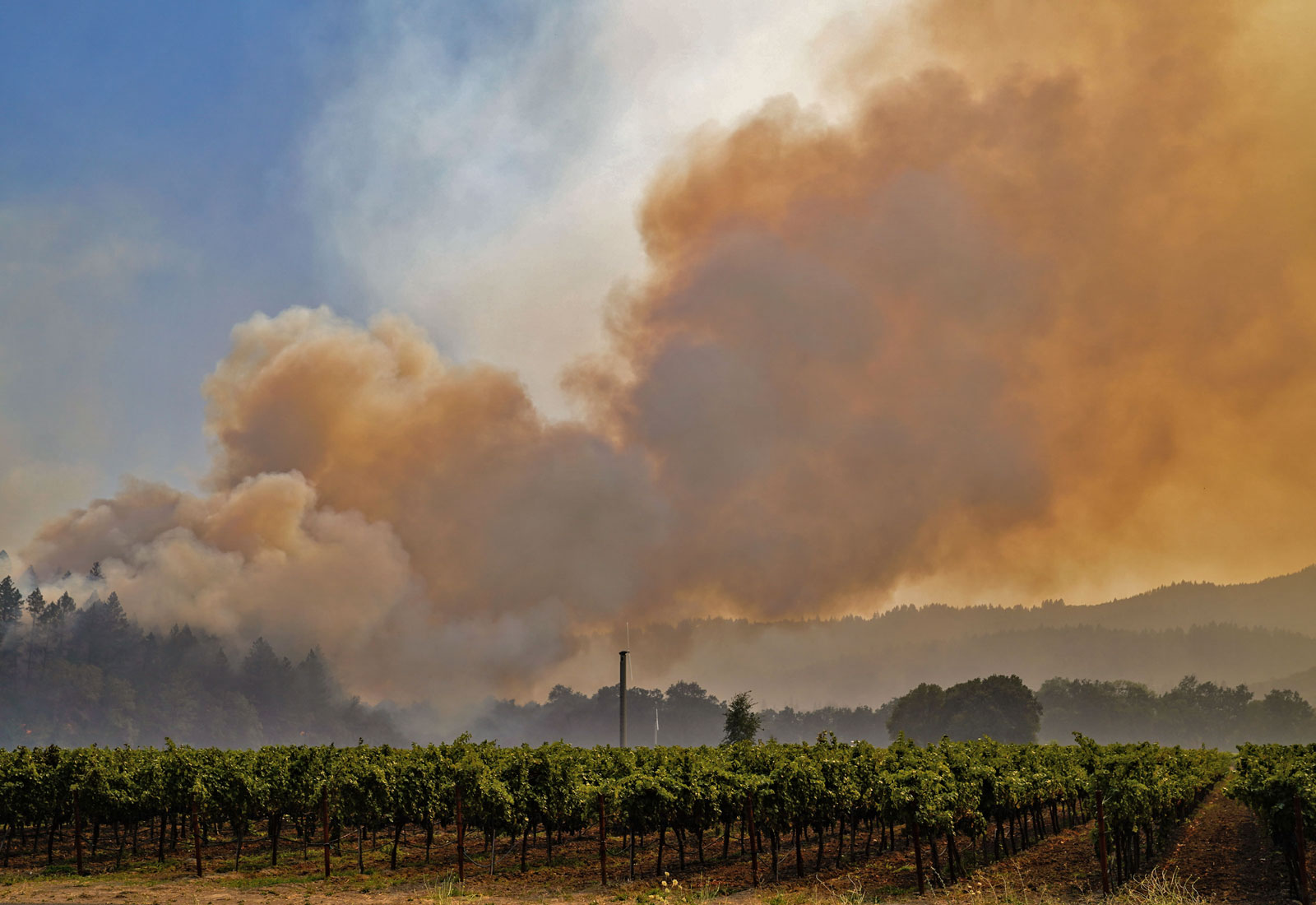 Smoke from a wildfire rising above a field of grape vines
