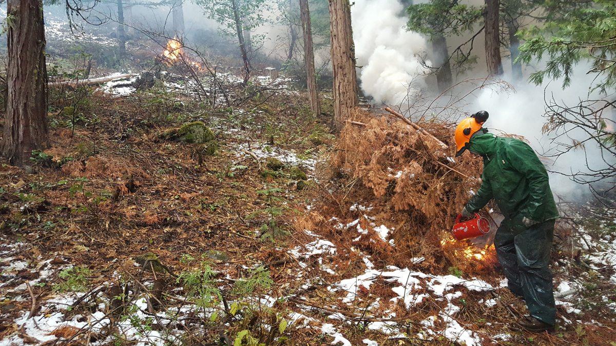 A controlled burn near Ashland Oregon.