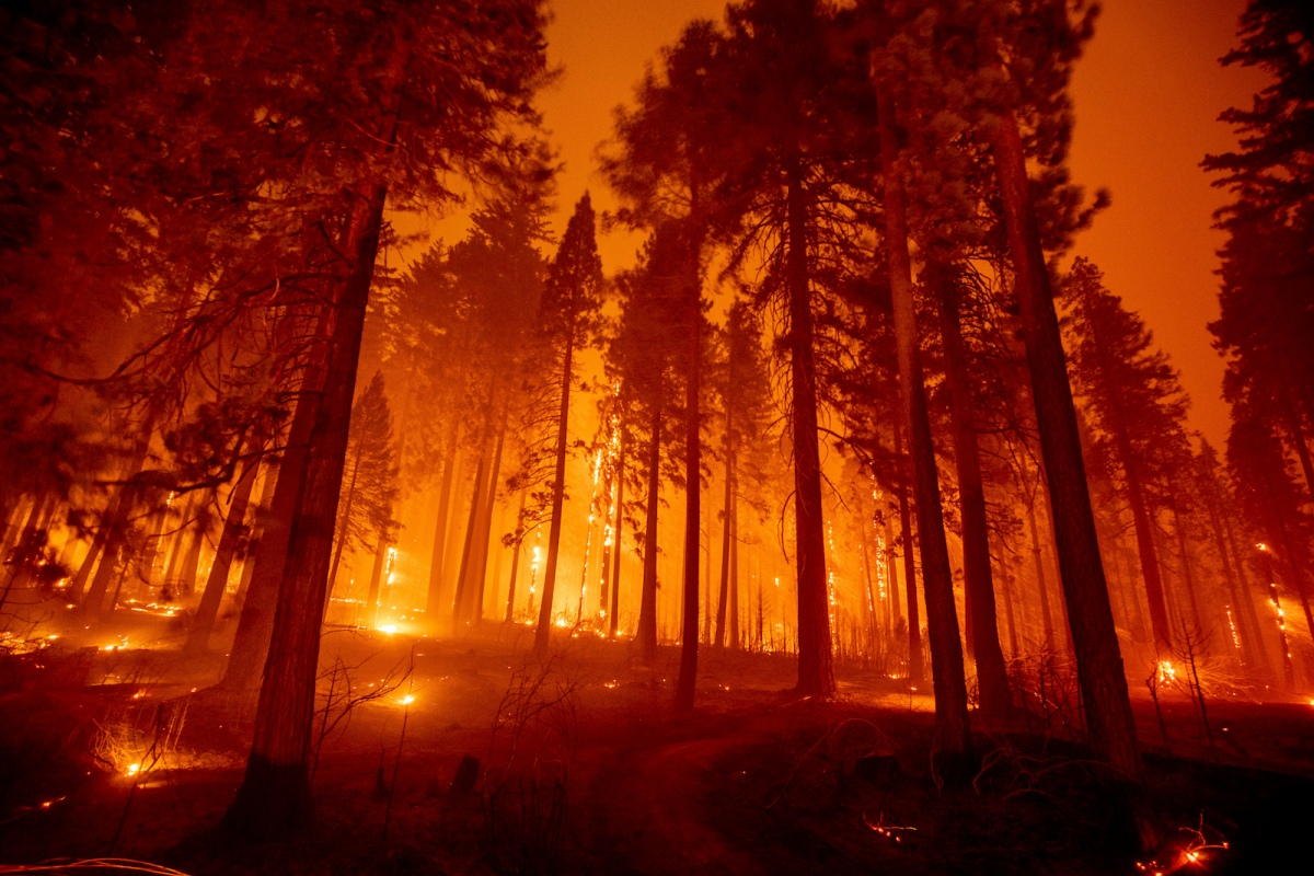 Ponderosa pines are silhouetted by the diffuse orange glow of smoke lit by dozens of fires.