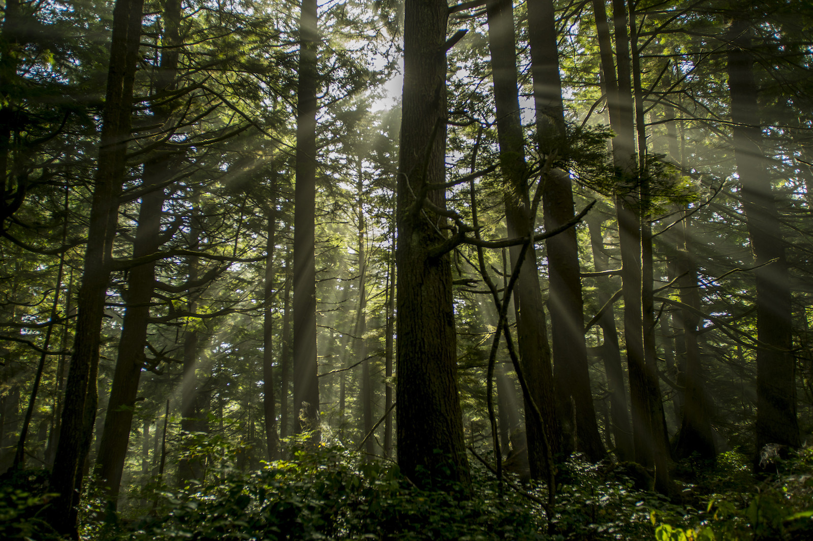 Sunrays breaking through the trees in the temperate