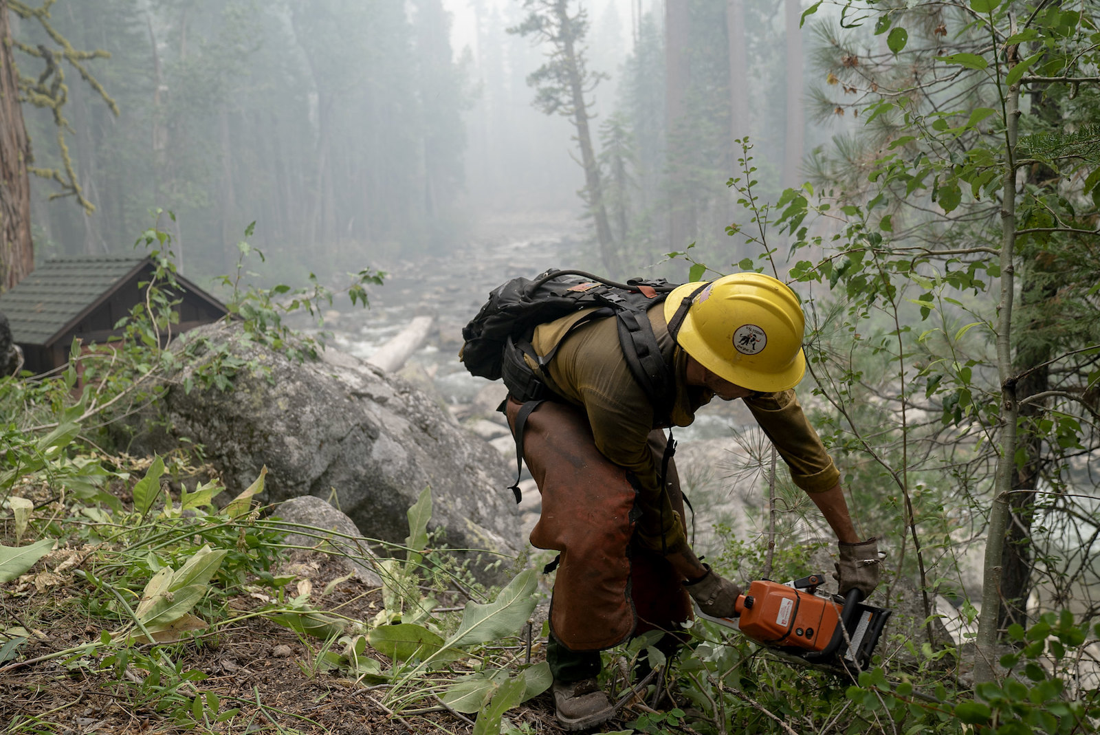 A person with a yellow hard had holds a chainsaw and clears out small green plants in a forest