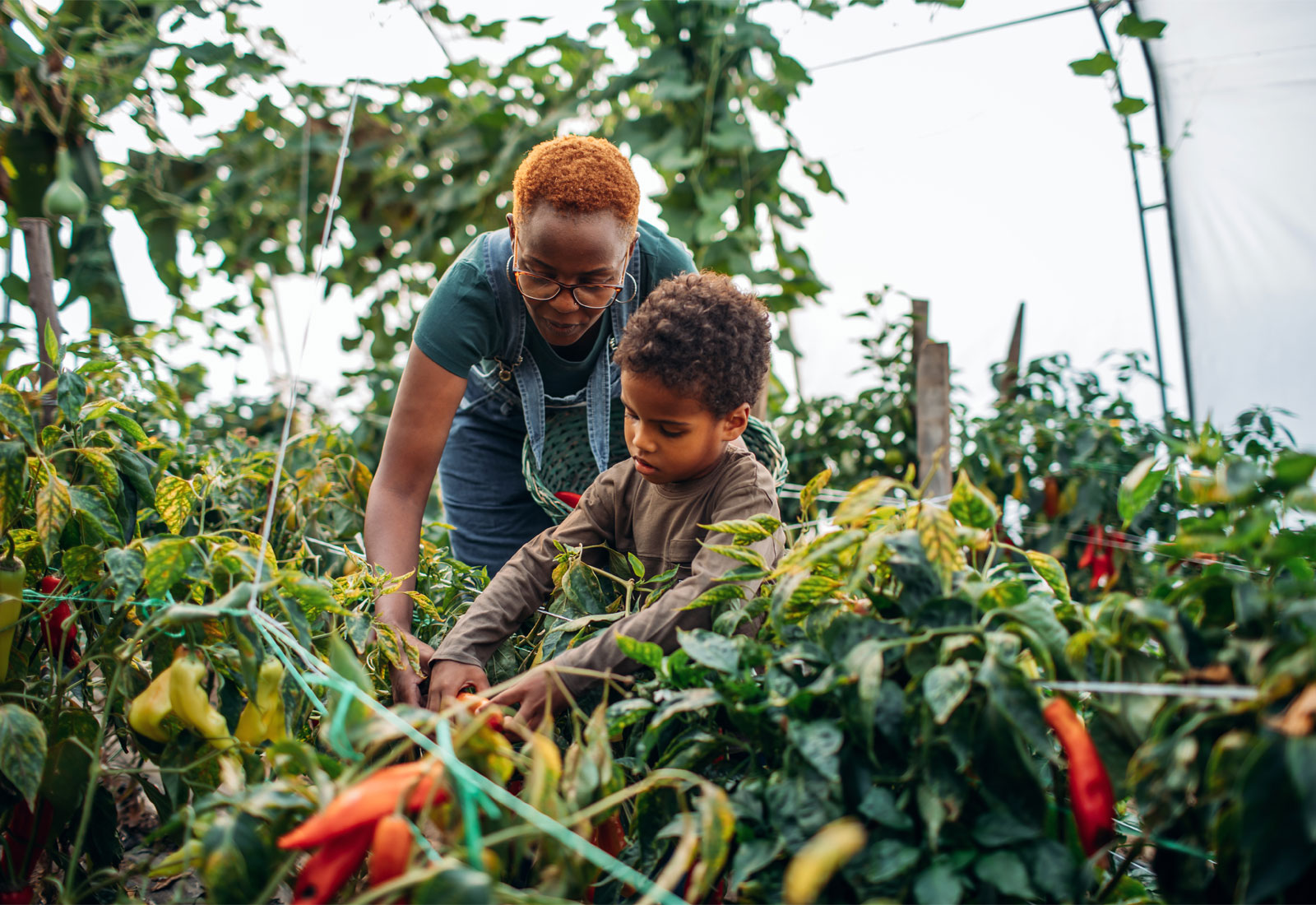 A woman and young boy harvesting peppers in a garden
