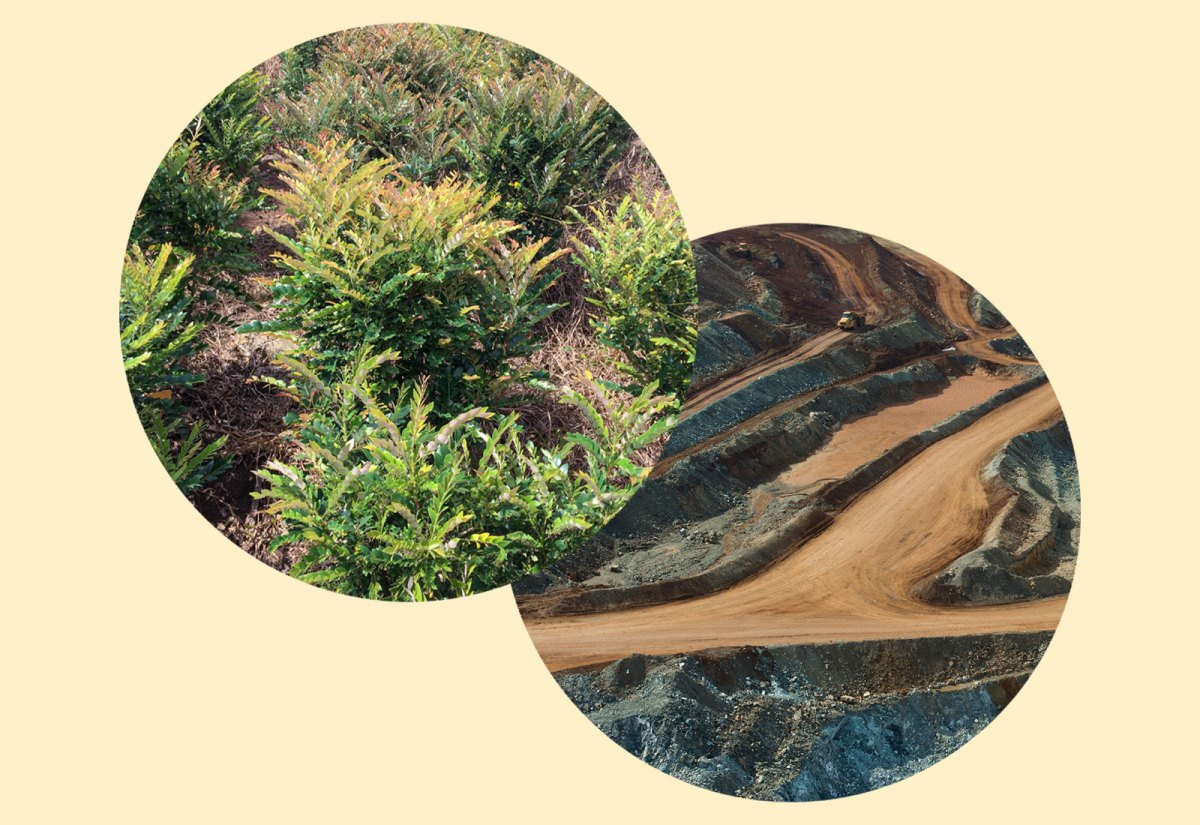 Collage: picture of shrubs on top of picture of cobalt mine