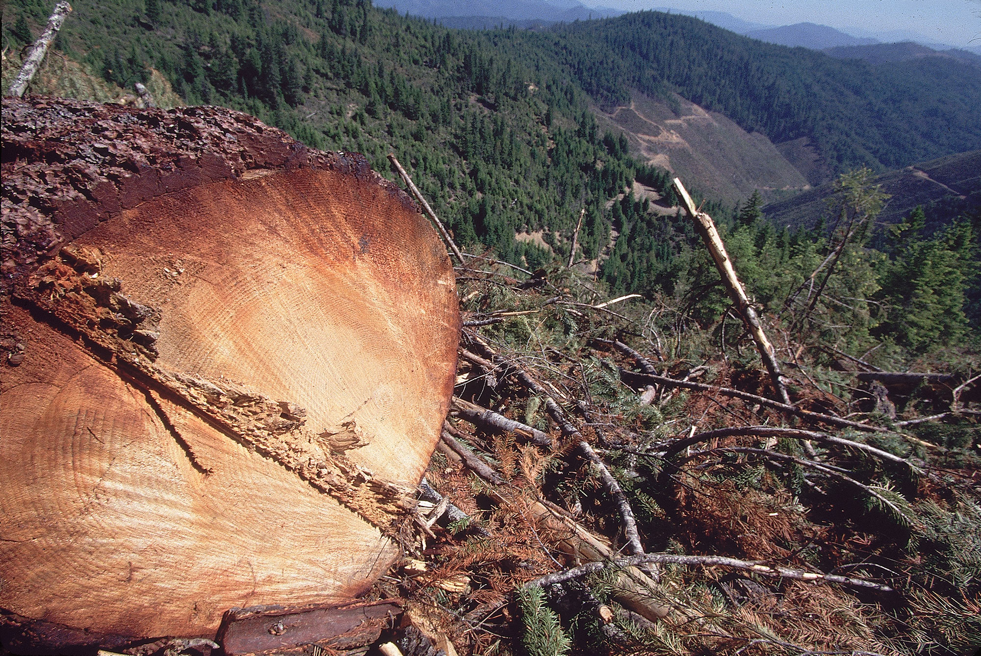 Siskiyou National Forest of Oregon with a Clearcut Forest area.