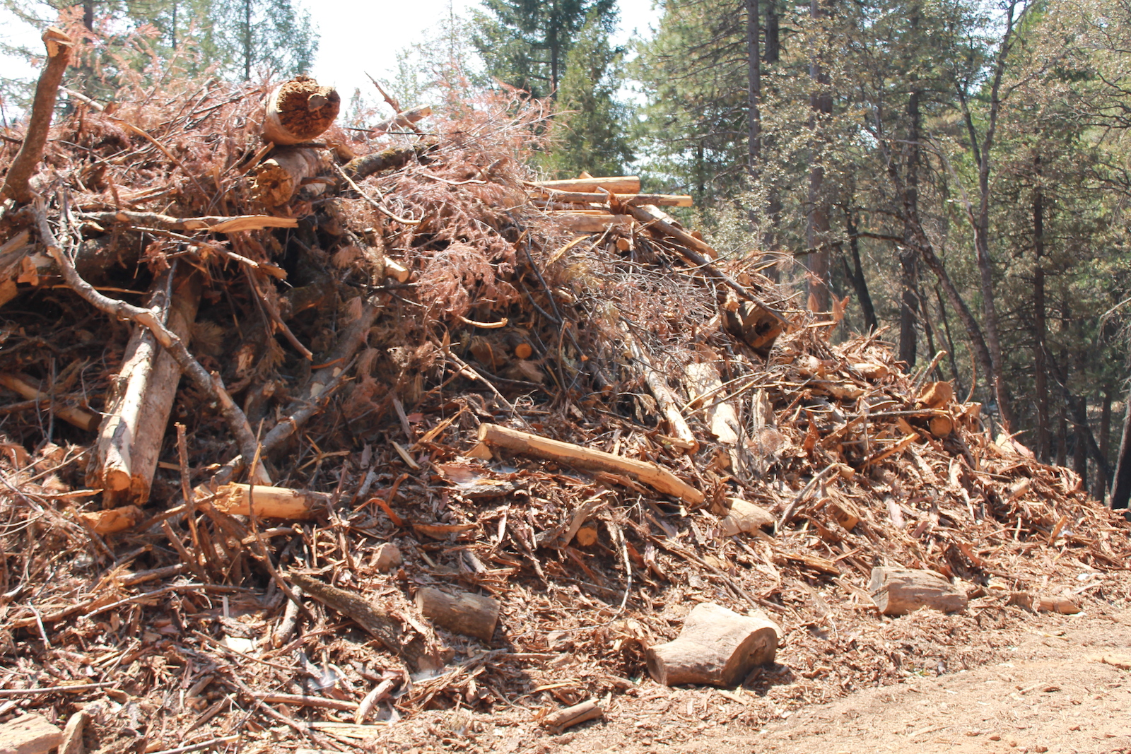 a really big pile of brown, dead twigs and branches