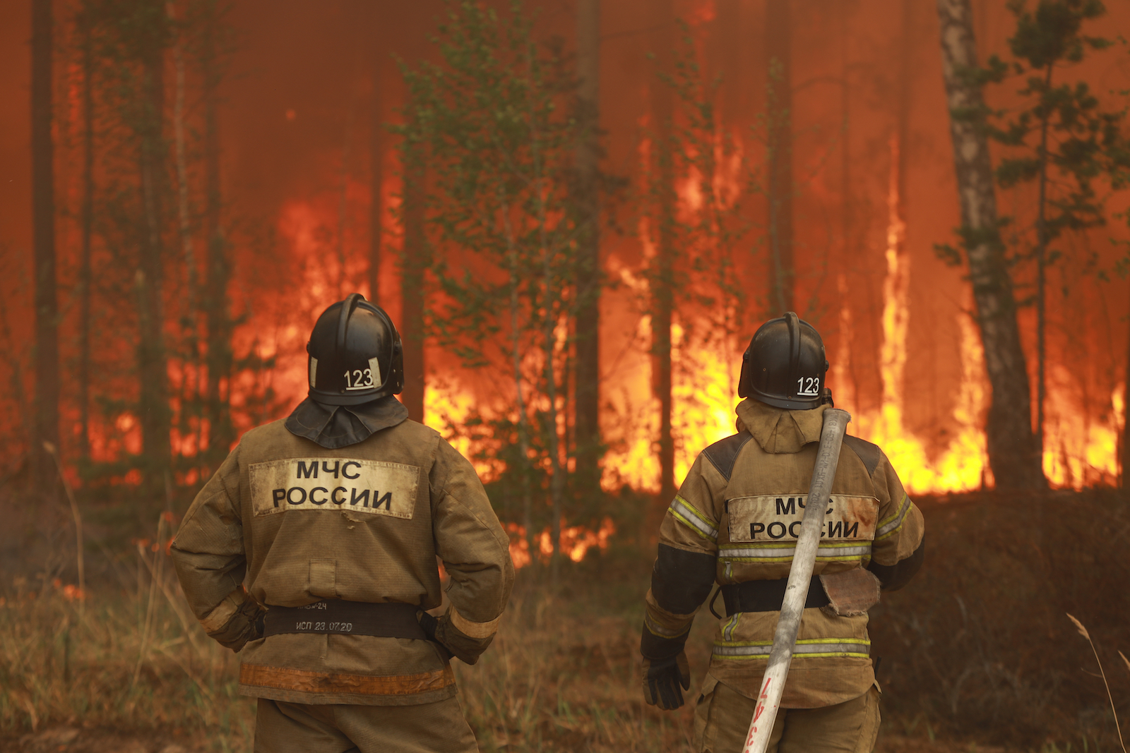 firefighters watch trees go up in flames