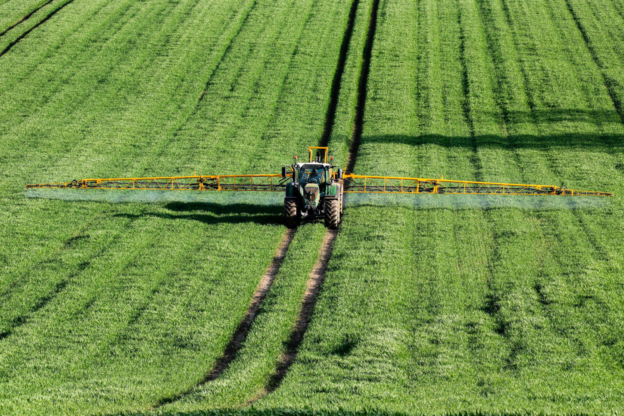 On a sunny day, a huge tractor sprays fertilizer on a green wheat field in England