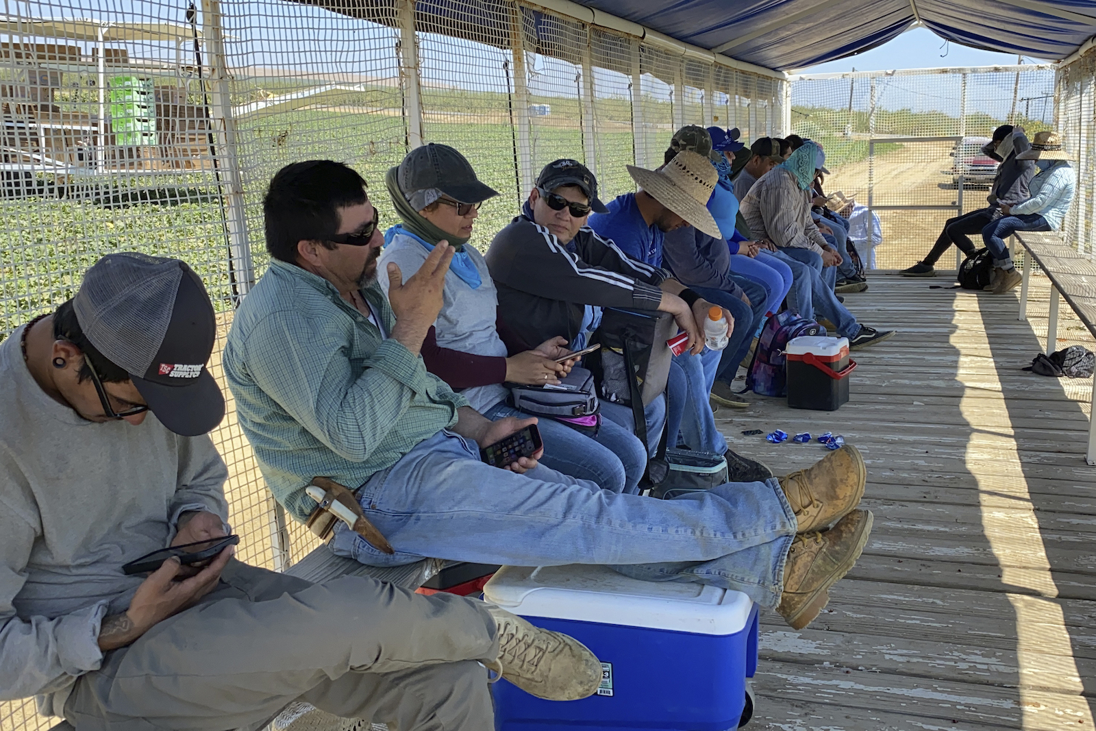 a line of workers in long sleeves and sunglasses, many with hats, sitting on a long bench in the shade of a netted area. Outside, green fields and intense sun
