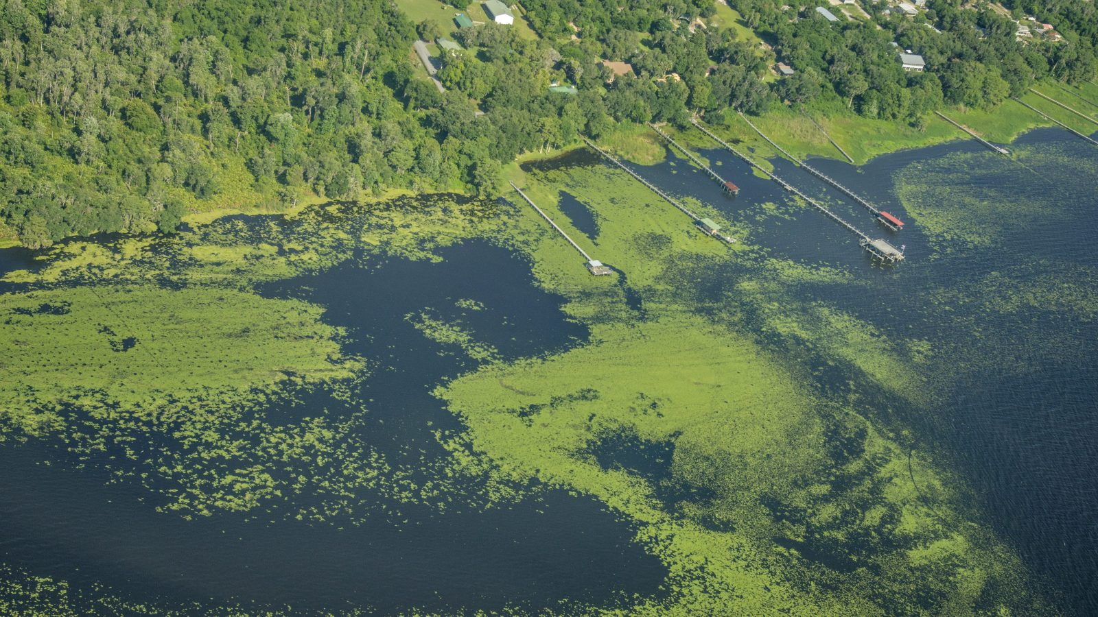 Toxic algae blooms are multiplying. The government has no plan to help. - Grist