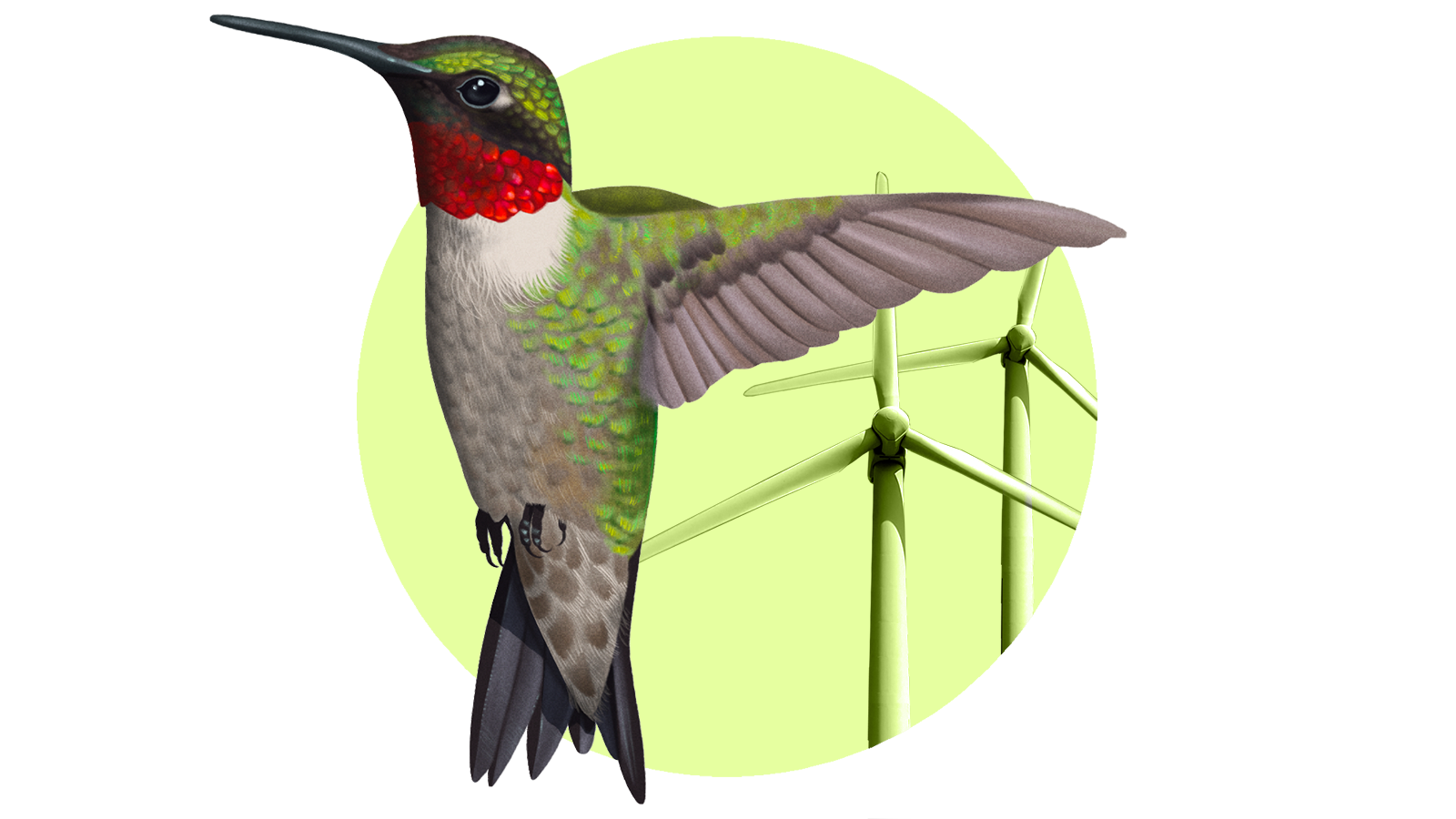 Meet the rogue birding group blocking wind energy at every turn thumbnail
