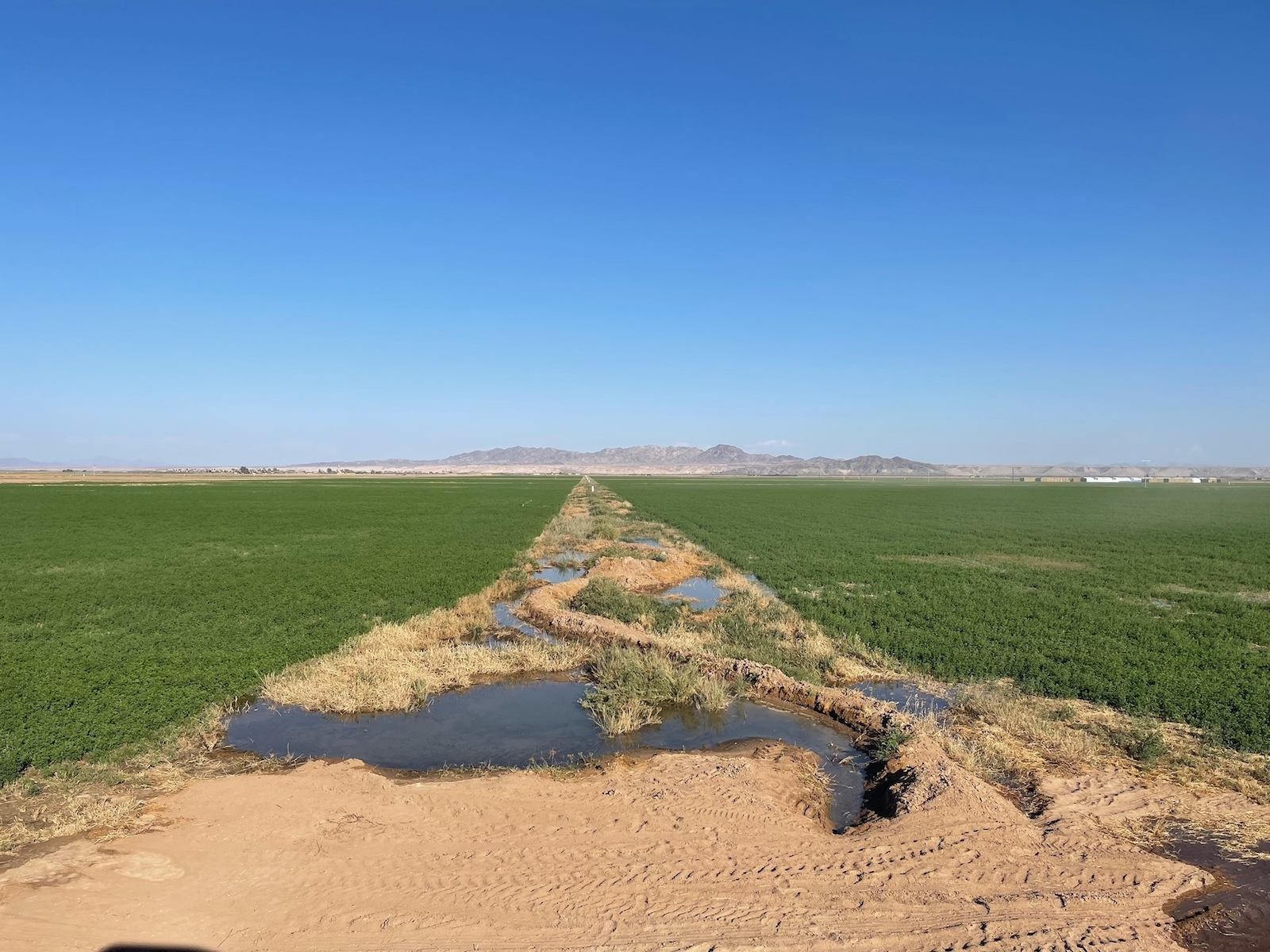 A dirt path between two green fields with a pipe leaking small pools of water